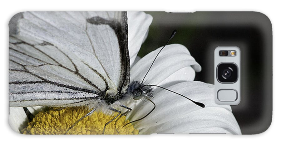 Pine White Galaxy S8 Case featuring the photograph Pine White Butterfly by Betty Depee