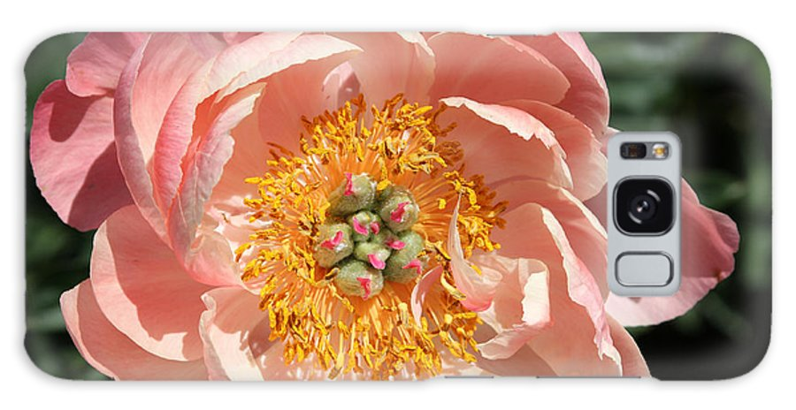 Rochester Galaxy S8 Case featuring the photograph Pink Peony by Meegan Streeter