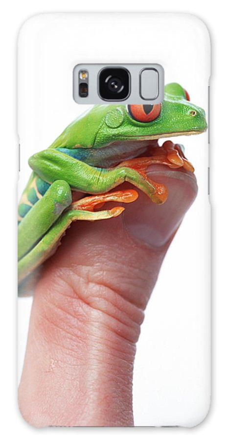 Color Galaxy S8 Case featuring the photograph Red-eyed Tree Frog Agalychnis Callidryas by Corey Hochachka