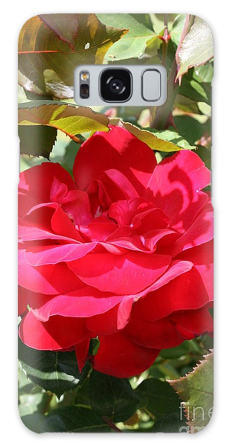 Red Rose Galaxy S8 Case featuring the photograph Red Red Rose by Christiane Schulze Art And Photography