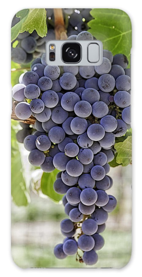 Colorado Galaxy S8 Case featuring the photograph Red Wine Grapes by Teri Virbickis