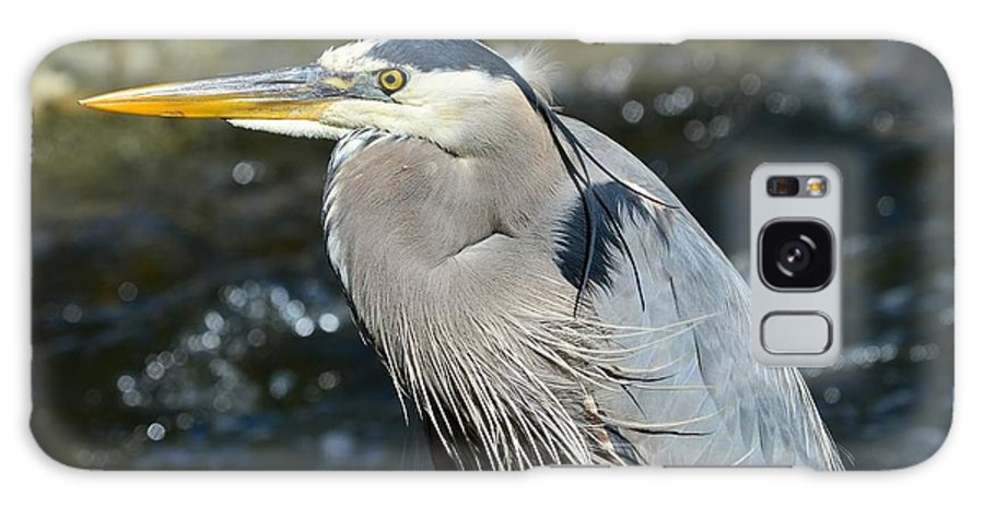 Great Blue Heron Galaxy S8 Case featuring the photograph Stoic by Fraida Gutovich