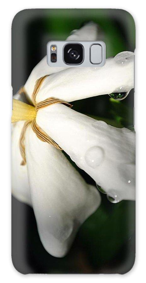 Gardenia Galaxy S8 Case featuring the photograph Sun Kissed Gardenia by Kelly Nowak