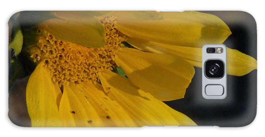 Flower Galaxy S8 Case featuring the photograph Sunflower by Deborah Coe