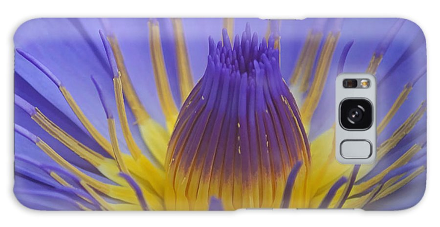 Plant Galaxy S8 Case featuring the photograph Tropic Water Lily 16 by Rudi Prott