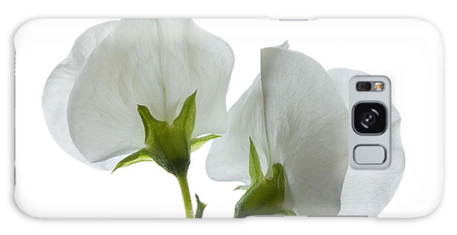 Sweet Pea Galaxy S8 Case featuring the photograph Two White Sweet Peas 2 by Ann Garrett