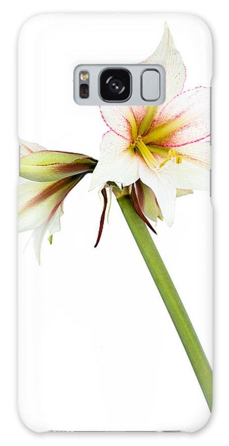 Amaryllis Galaxy S8 Case featuring the photograph White Amaryllis Flower by Frank Gaertner