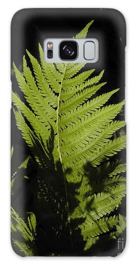 Dlgerring Galaxy S8 Case featuring the painting Woodland Fern by D L Gerring