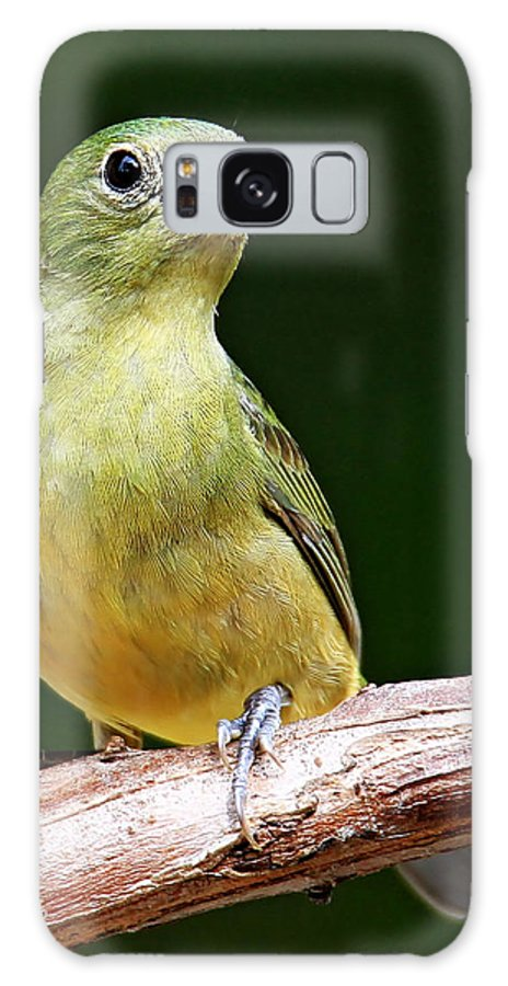 Painted Bunting Galaxy S8 Case featuring the photograph Painted Bunting by Ira Runyan