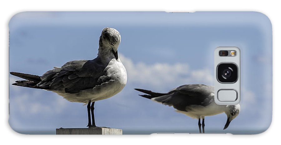 Birds Galaxy S8 Case featuring the photograph 201409090-046 Sea-gull-preening 2x3 by Alan Tonnesen