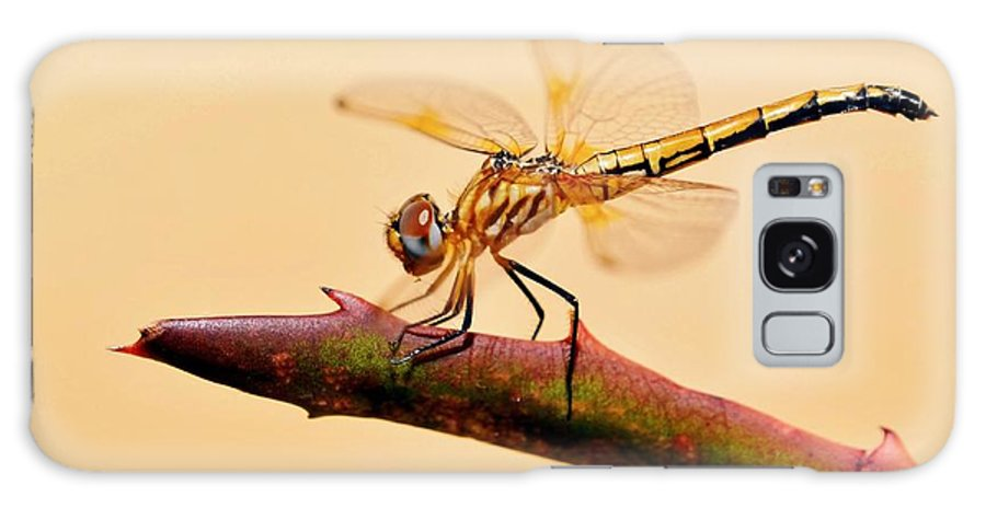 Dragonfly; Garden; Insect; Green; Plant; Nature; Sunlight; Macro; Blue; Eyes; Wings; Sky; Summer; Warm; Aloe Vera; Background; Decorative; Detail; Galaxy S8 Case featuring the photograph Dragonfly by Werner Lehmann
