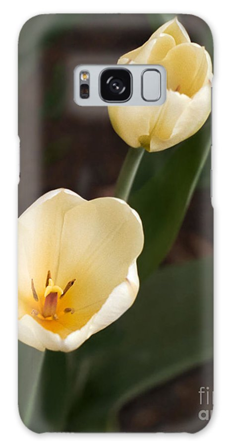 White Tulips Galaxy S8 Case featuring the photograph 2whites by Robert Marleau