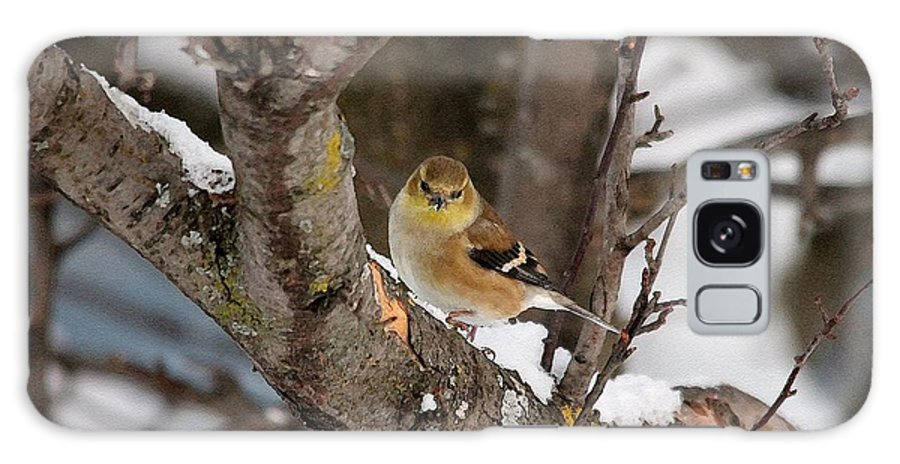 Mccombie Galaxy S8 Case featuring the painting American Goldfinch In Winter by J McCombie