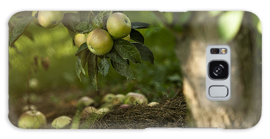Agricultural Galaxy S8 Case featuring the photograph Apple Tree by Dan Radi