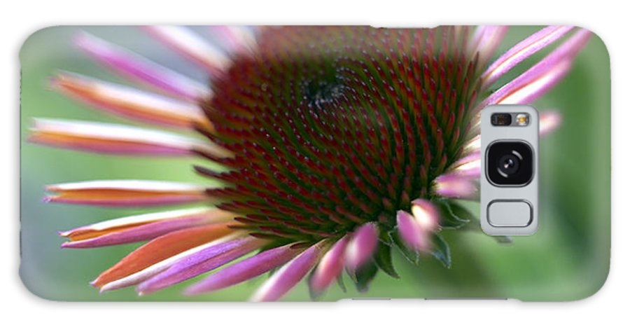 Genus Echinacea Galaxy Case featuring the photograph Coneflower by Tony Cordoza