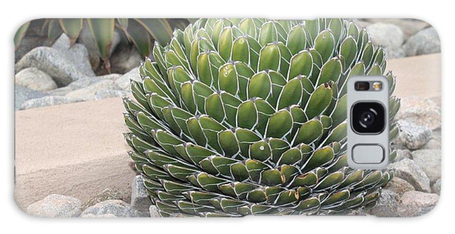 Cactus Galaxy S8 Case featuring the photograph Garden Cactus by Robert Butler