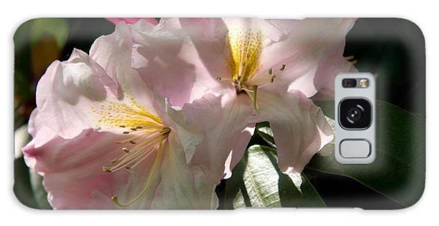 Pink Rhododendron Galaxy S8 Case featuring the photograph Glowing Pink by Christiane Schulze Art And Photography
