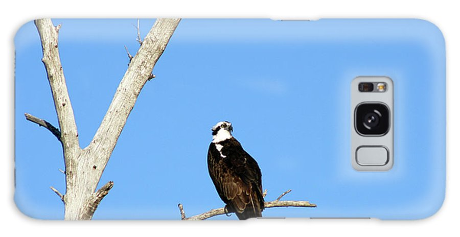 Feather Galaxy S8 Case featuring the photograph Osprey by Christiane Schulze Art And Photography