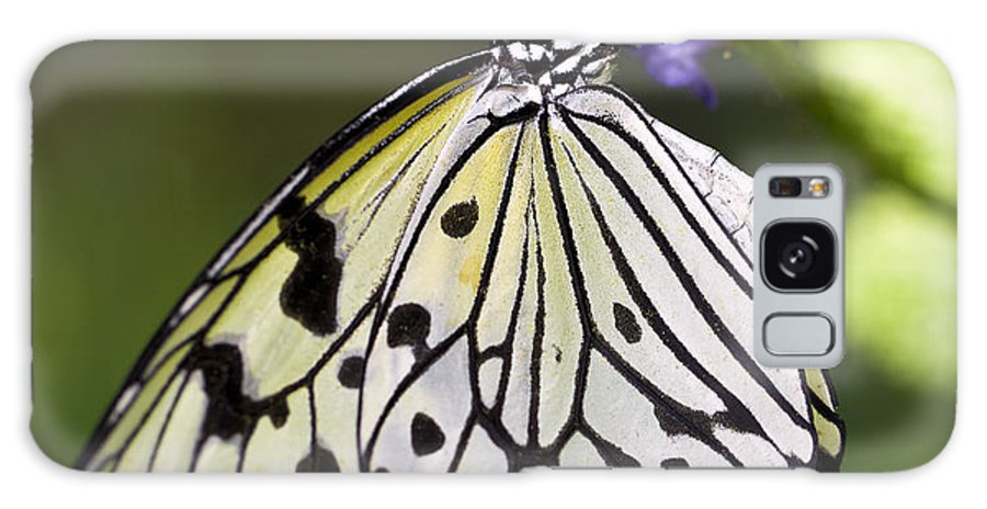 Butterfly Galaxy S8 Case featuring the photograph Paper Kite Butterfly by Brandon Alms
