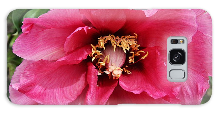Peonies Galaxy S8 Case featuring the photograph Pink Peony by Christiane Schulze Art And Photography
