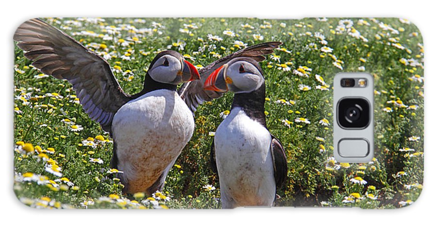 Puffins Galaxy S8 Case featuring the photograph Puffins by Traci Law