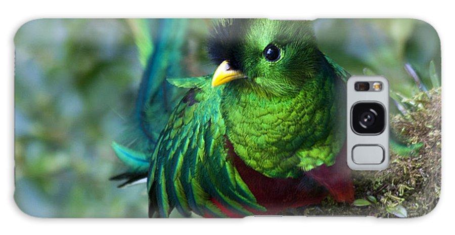 Bird Galaxy S8 Case featuring the photograph Quetzal by Heiko Koehrer-Wagner