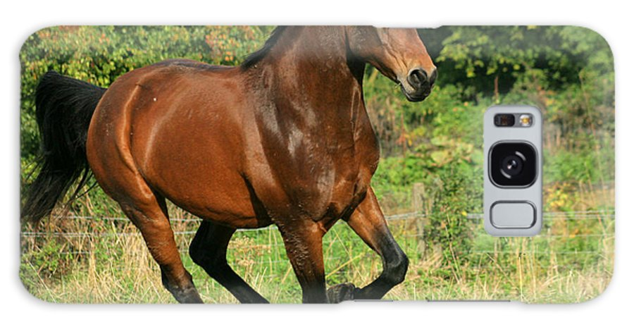 Horse Galaxy S8 Case featuring the photograph Running Free by Angel Ciesniarska