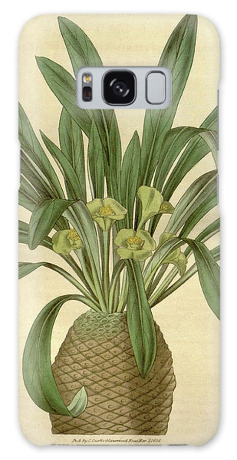 Botanical Galaxy S8 Case featuring the drawing Botanical Print Or English Natural History Illustration by Quint Lox