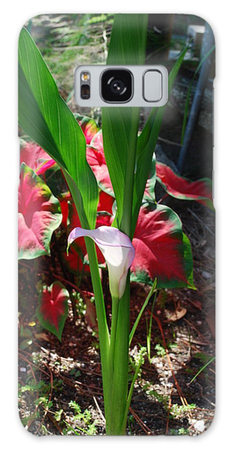 Growing In My Yard Galaxy S8 Case featuring the photograph Canna Lily by Robert Floyd