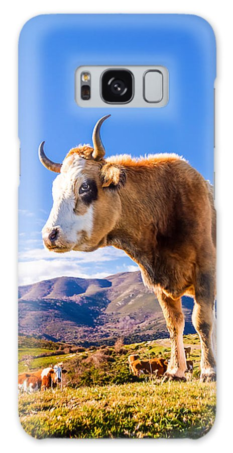 Colombano Galaxy S8 Case featuring the photograph Corsican Cow At Col De San Colombano by Jon Ingall