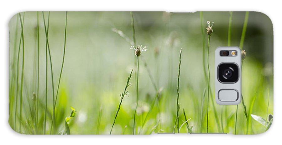 Grass Galaxy S8 Case featuring the photograph Green Grass by Mats Silvan