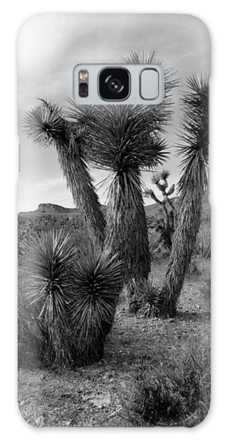 Joshua Tree Galaxy S8 Case featuring the photograph Joshua Tree Utah by Nathan Abbott