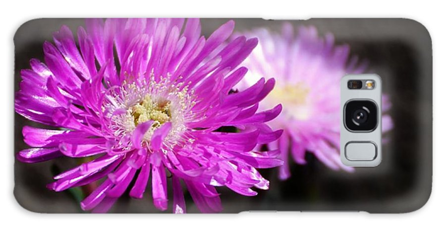 Close Up; Pink; Blossom; Sunlight; Nature; Plant; Flower; Garden; Background; Petals; Decorative; White; Galaxy S8 Case featuring the photograph Pink by Werner Lehmann