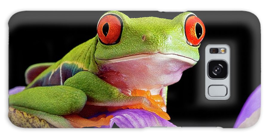 Agalychnis Callidryas Galaxy Case featuring the photograph Red-eyed Tree Frog by Linda Wright