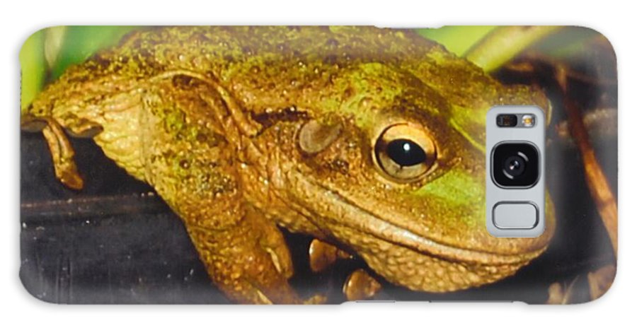 Hanging Out Galaxy S8 Case featuring the photograph Treefrog by Robert Floyd