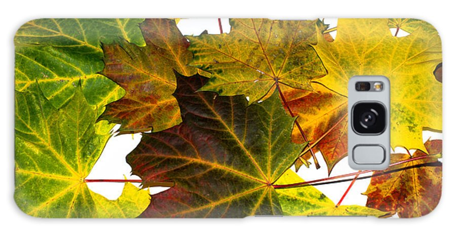 Maple Galaxy S8 Case featuring the photograph Autumn Maple Leaves by Frank Gaertner