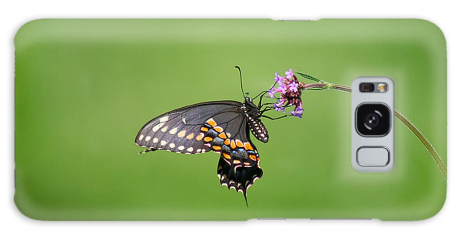 Butterfly Galaxy S8 Case featuring the photograph Black Swallowtail Butterfly by Karen Adams