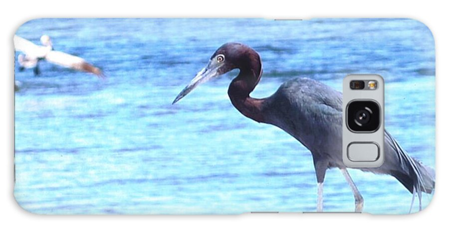 Feeding On The Shoreline Galaxy S8 Case featuring the photograph Egret by Robert Floyd