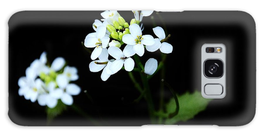 Flowers Galaxy S8 Case featuring the photograph Flowers by Moments In Time Photographics