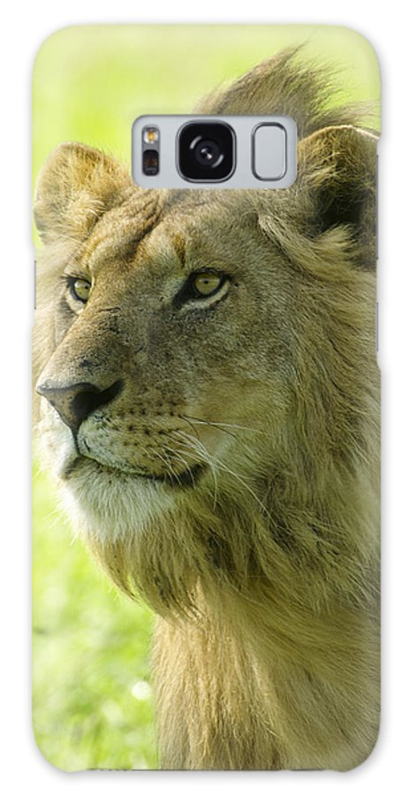 Lion Galaxy S8 Case featuring the photograph Golden Boy by Michele Burgess