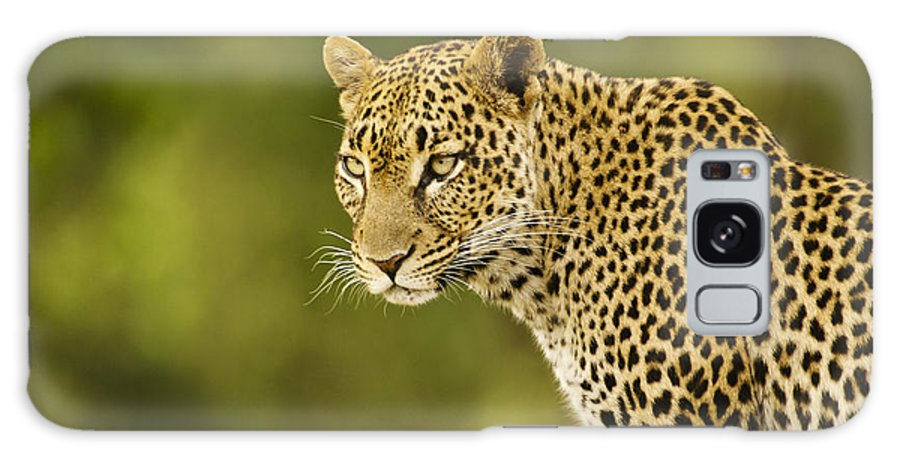 Africa Galaxy S8 Case featuring the photograph Lovely Leopard by Michele Burgess
