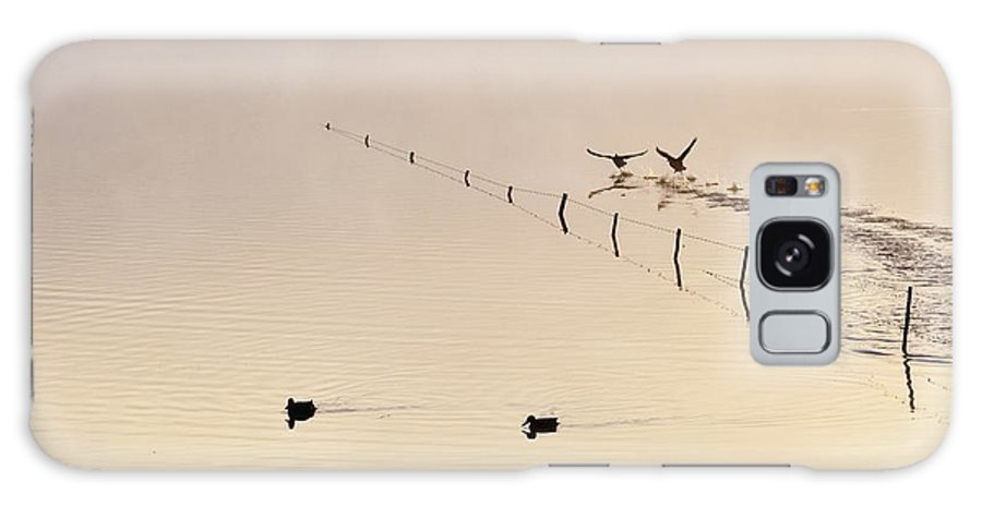 Ducks; Swimming; Pond; Morning Light; Birds; Early; Fog; Background; Fence; Swartland; South Africa; Landscape; Galaxy S8 Case featuring the photograph Morning Light.. by Werner Lehmann