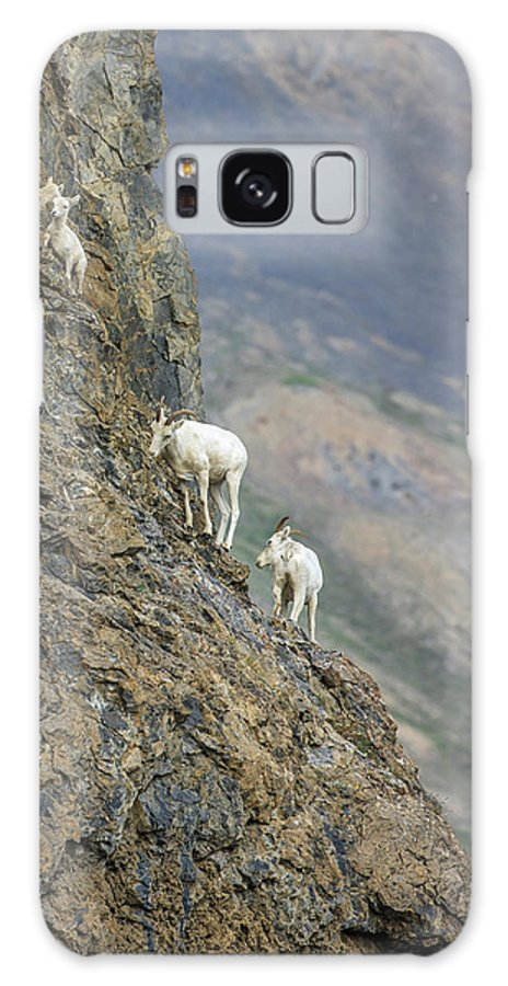 Alaska Galaxy Case featuring the photograph Mountain Goats Along Kongakut River by Tom Norring