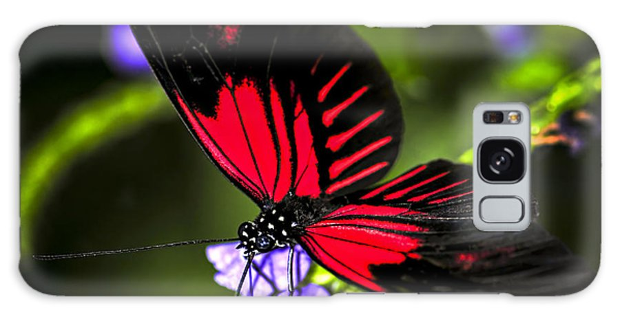 Heliconius Galaxy S8 Case featuring the photograph Red Heliconius Dora Butterfly by Elena Elisseeva