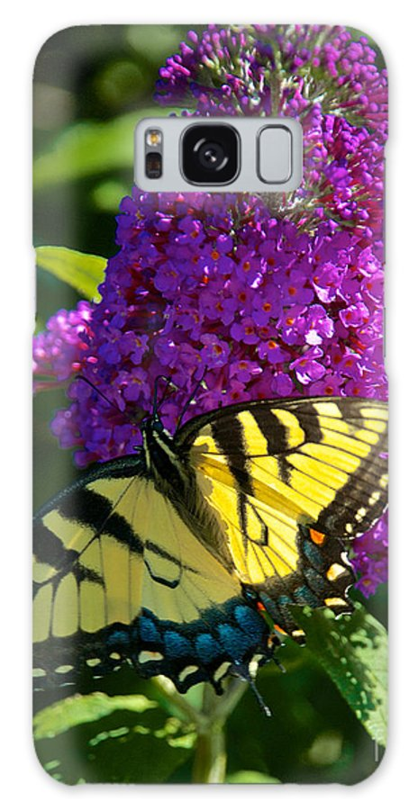Butterfly Galaxy S8 Case featuring the photograph Yellow Tiger Swallowtail Papilio Glaucus Butterfly by Mark Dodd