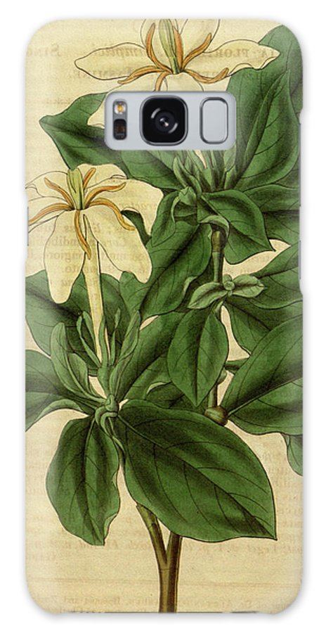 Botanical Galaxy S8 Case featuring the drawing Botanical Print By Sir William Jackson Hooker by Quint Lox