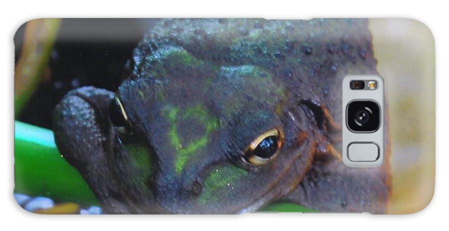 I'm Thinking Galaxy S8 Case featuring the photograph Treefrog by Robert Floyd