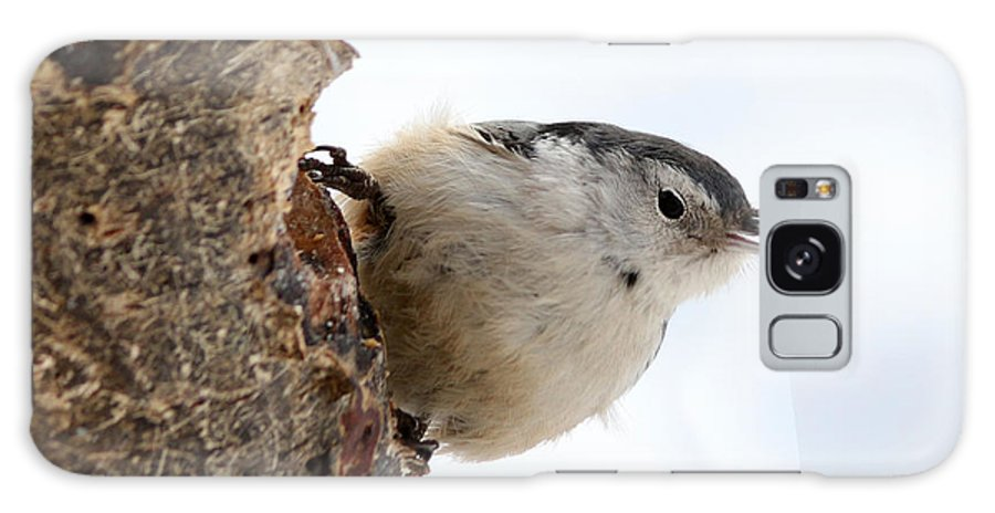 Trees Galaxy S8 Case featuring the photograph White-breasted Nuthatch by Lori Tordsen