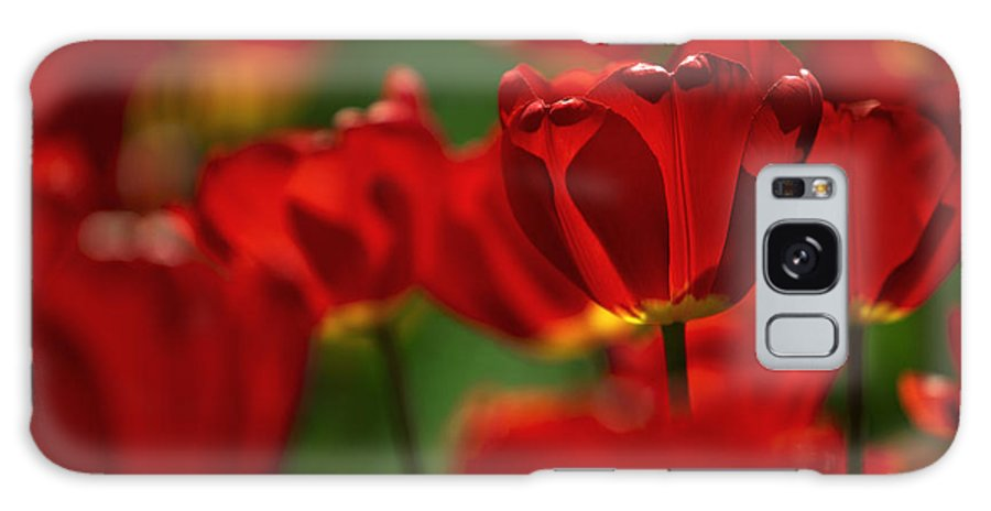 Tulip Galaxy S8 Case featuring the photograph Red And Yellow Tulips by Nailia Schwarz