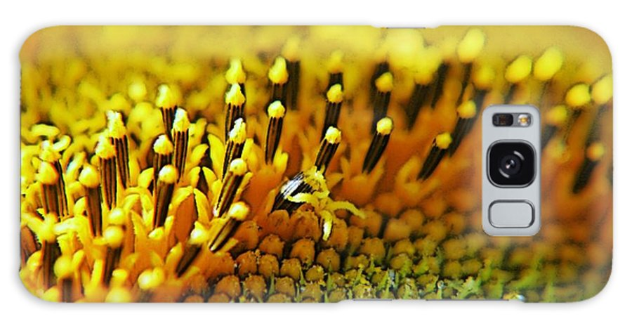 Sunflower Galaxy S8 Case featuring the photograph Untitled by Gluca Pagnini